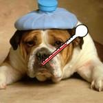 Cachorro gripado