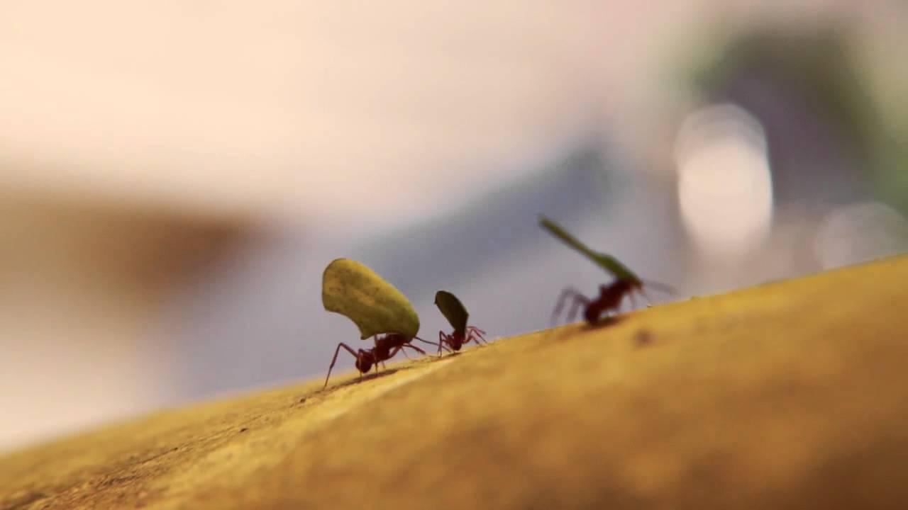 Parábola da demissão da formiga desmotivada